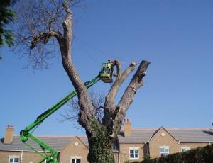 Turneys Treecare