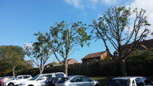 Tree Pruning | tree surgery