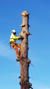 Tree Removal | Tree Surgery