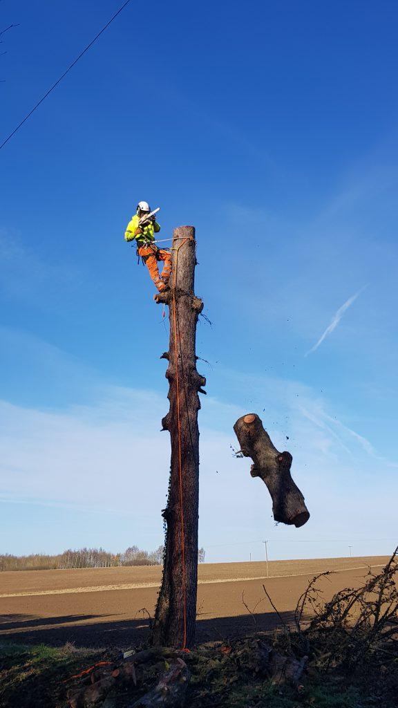 Tree Removal   Tree Surgery