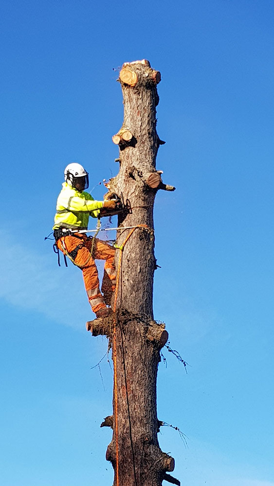 Tree Surgeon in Cambridgeshire