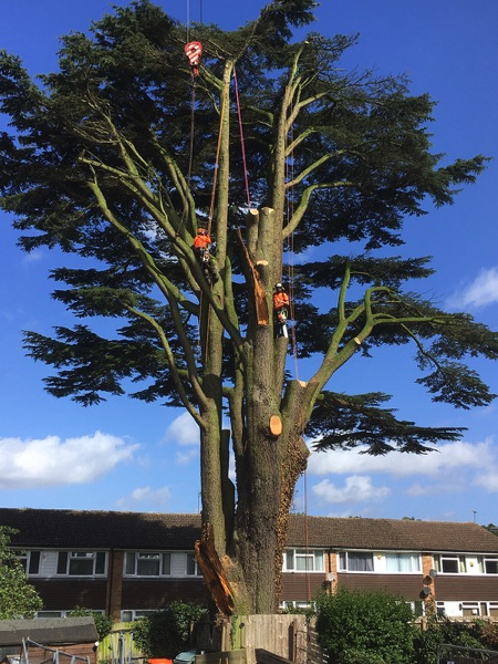 Tree Surgeons Working Image