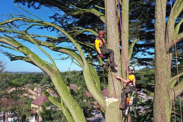 Happy tree surgeons